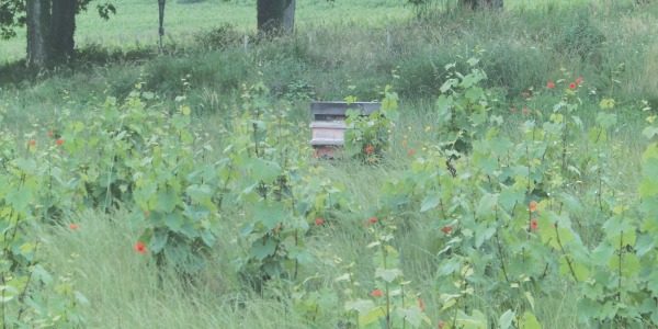 2007 - Beehives in the vineyard
